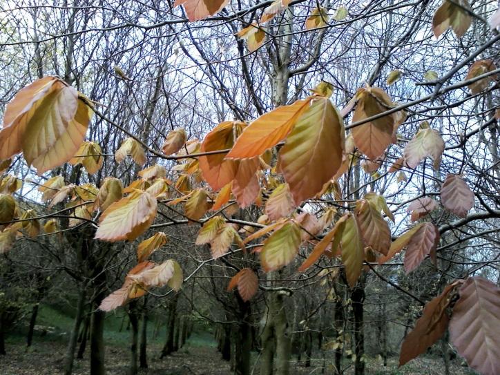Yomer Wood Camping leaves