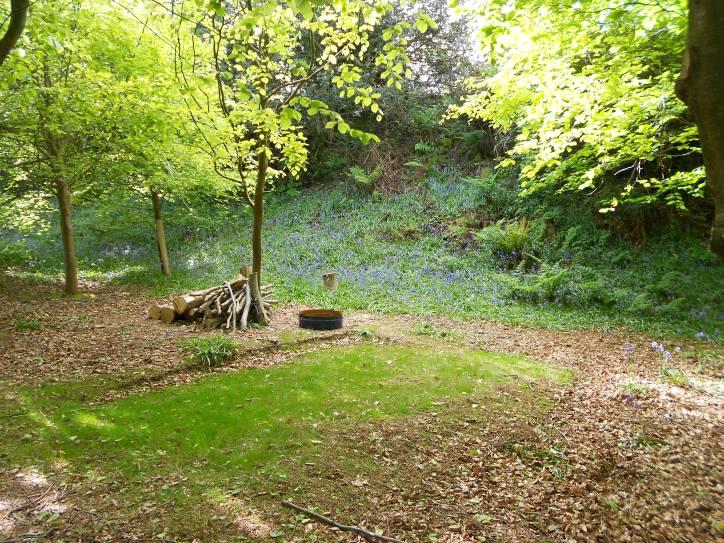 Beech wood pitch