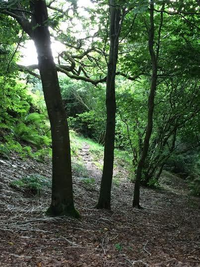 Among the beech trees