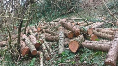 Pick a log....
